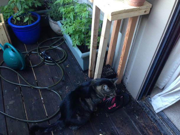 tabby-gardening-storm4