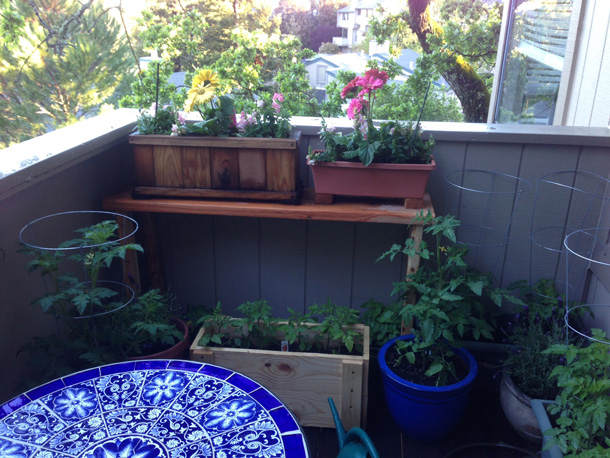 Tabby gardening