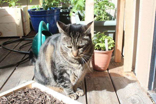 Feline Gardening 101