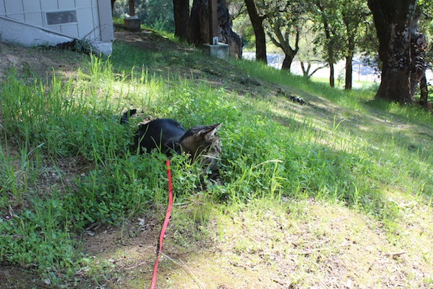 tabs-the-cat-spring-2014 001