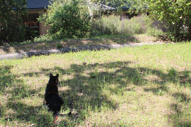 tabs-the-cat-spring-2014 002