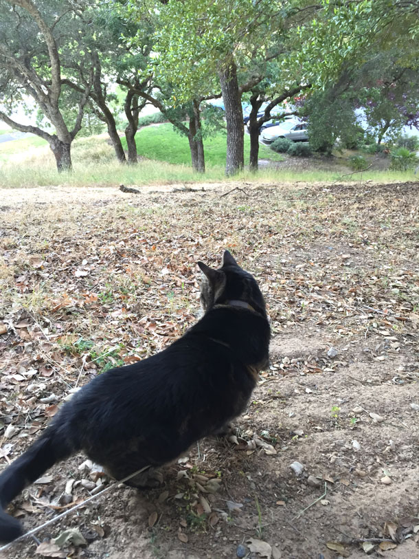 tabs-cat-on-patrol