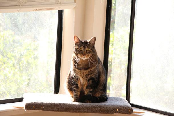 tabs-cat-window-2