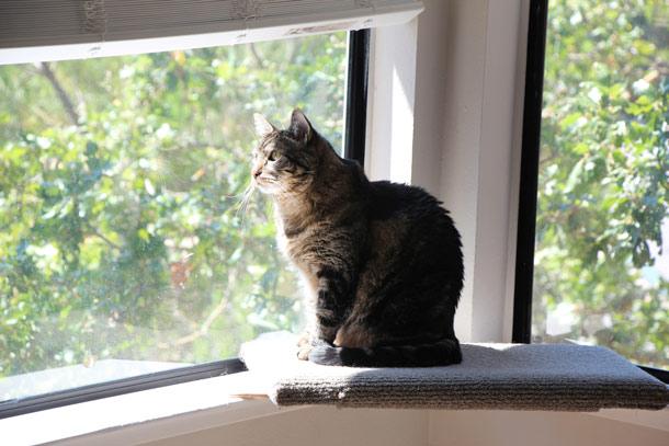 tabs-cat-window